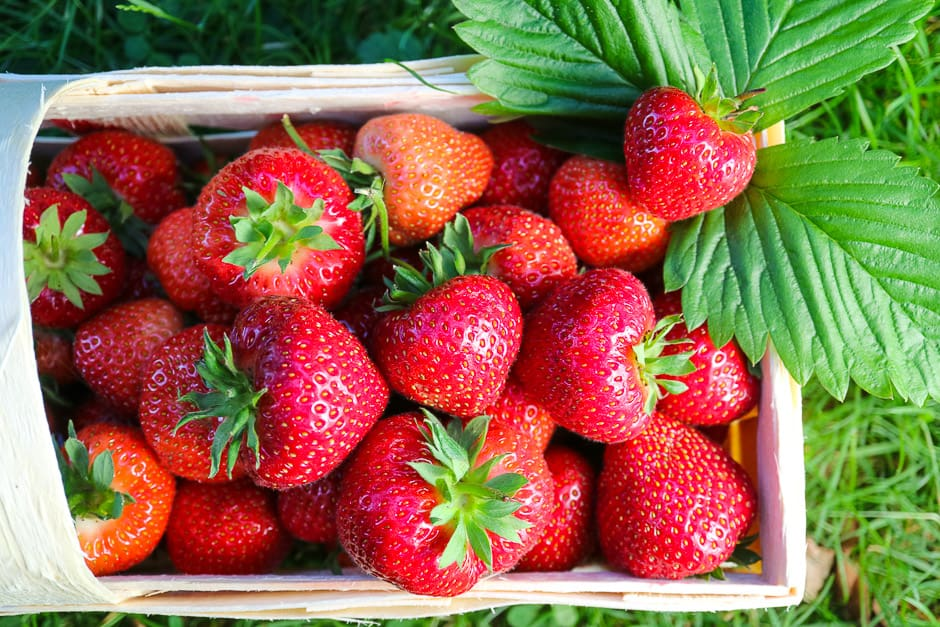 Strawberries in the basket, fresh from the field