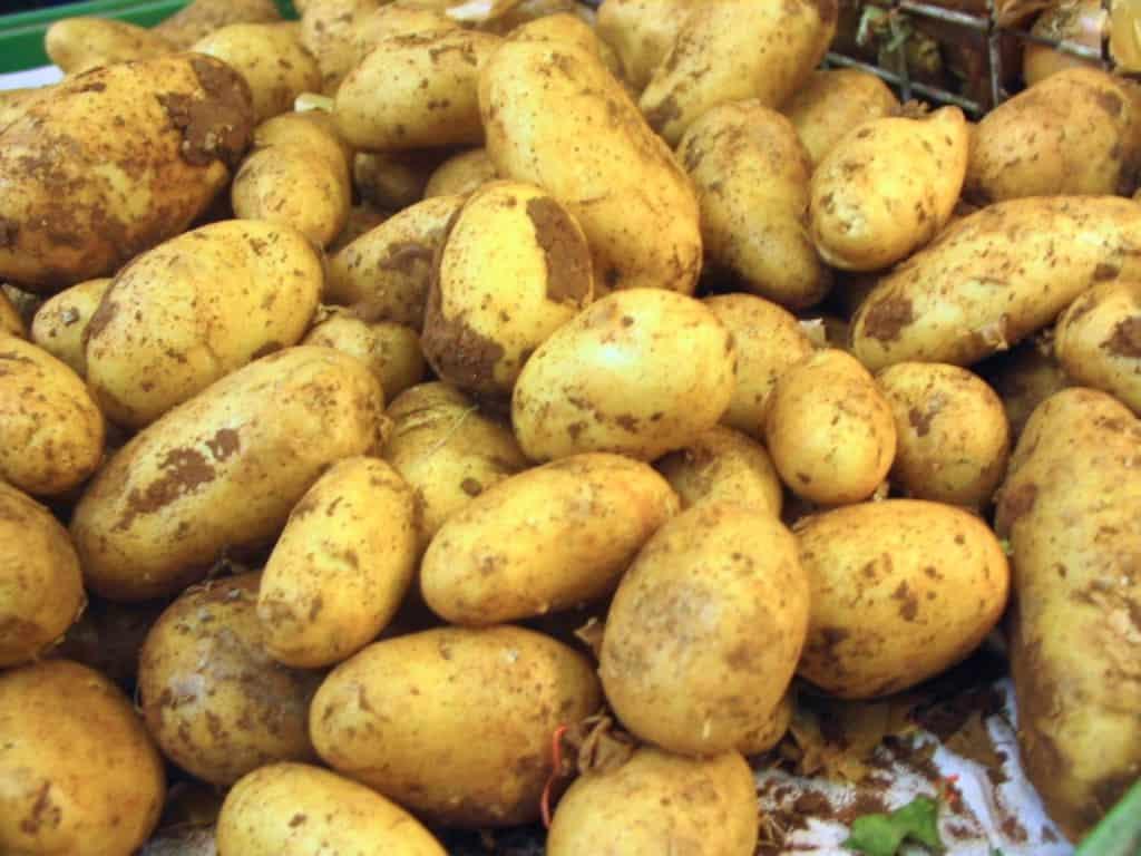 Die richtige Kartoffelsorte für Kartoffelsalat ist extrem wichtig für gutes Gelingen