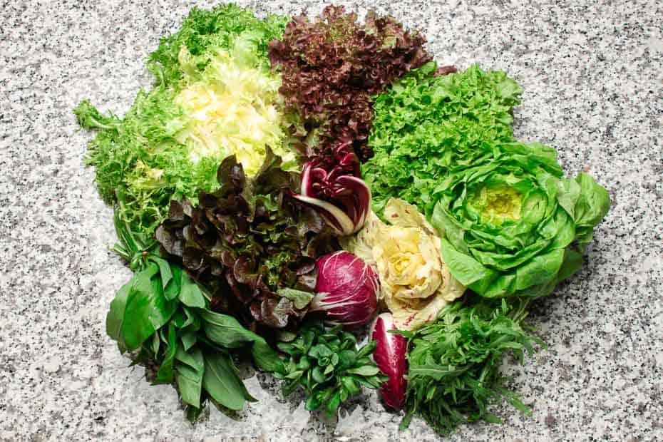 Bunte Blattsalate, verschiedene Sorten.