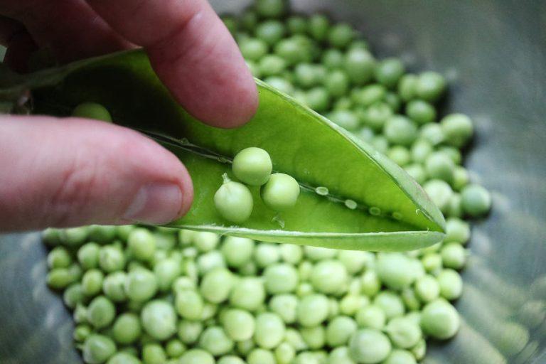 Freische Erbsen zuputzen, die Erbsen aus den Schoten entnehmen.