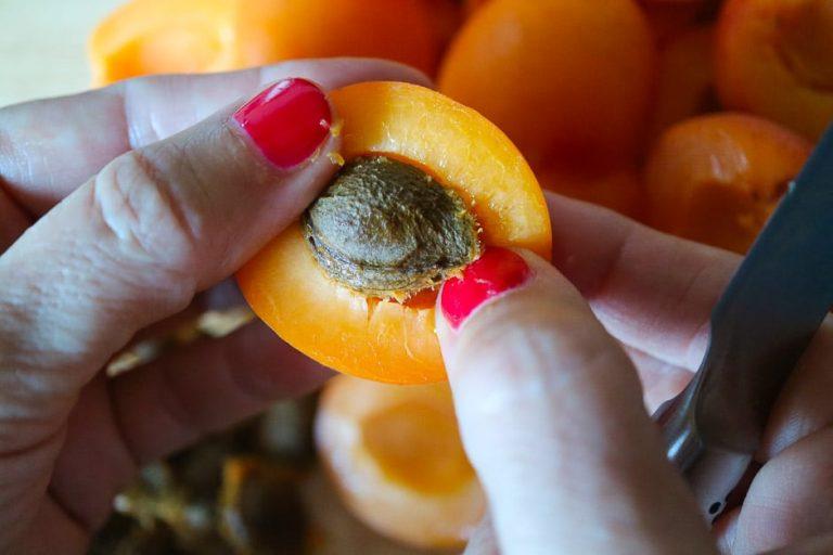 Entfernen vom Aprikosenkern