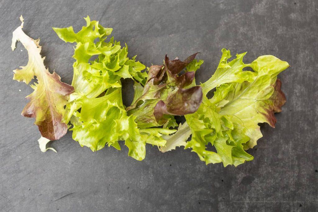 Blattsalate für die Vorspeise