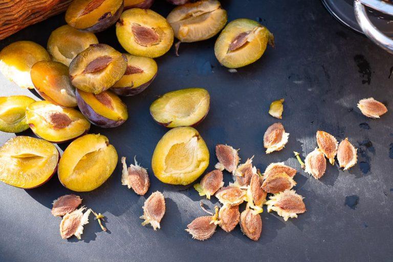 Zwetschgenkerne aus der Frucht entfernt